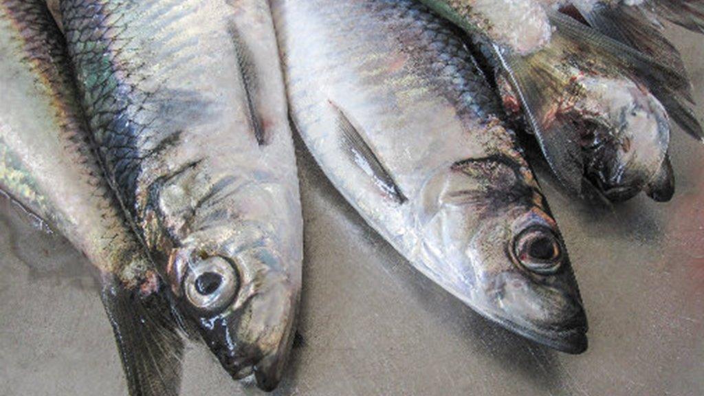 Vinnuligar fiskiroyndir eftir norðhavssild fyri 2021