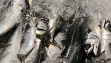 FRÁBOÐAN um at broyta skipanina í fiskiskapinum eftir makreli í norskum sjógvi