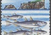 Fiskamarknaðurin selt svartkjaftakvotu á uppboðssølu