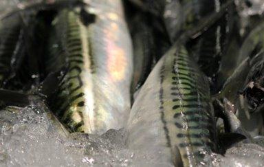 Vinnuligar fiskiveiðiroyndir
